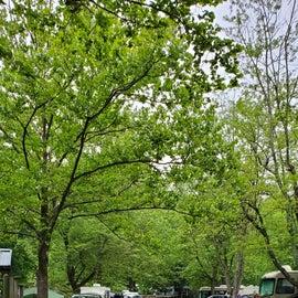 Nice tree canopy.