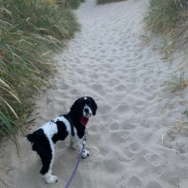 Short sandy walk to beach
