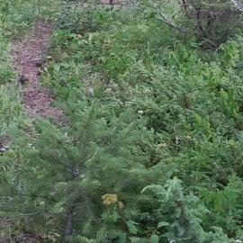 Lots of deer roaming around