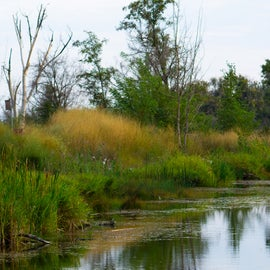 Nearby walkable wildlife and fishing area.