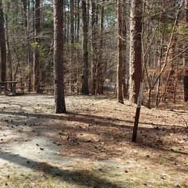 Pocomoke River Shad Landing Site 106