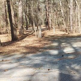 Pocomoke River Shad Landing Site 108