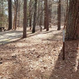Pocomoke River Shad Landing Site 110