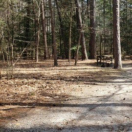 Pocomoke River Shad Landing Site 113