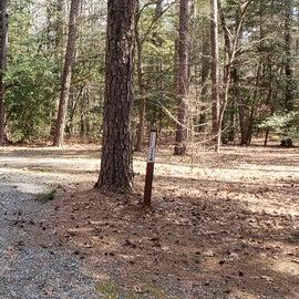 Pocomoke River Shad Landing Site 114