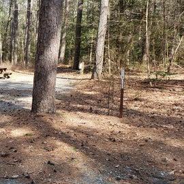 Pocomoke River Shad Landing Site 116