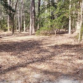 Pocomoke River Shad Landing Site 135
