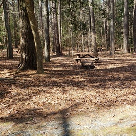 Pocomoke River Shad Landing Site 133