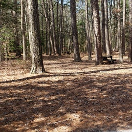 Pocomoke River Shad Landing Site 131