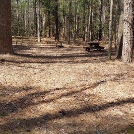 Pocomoke River Shad Landing Site 130