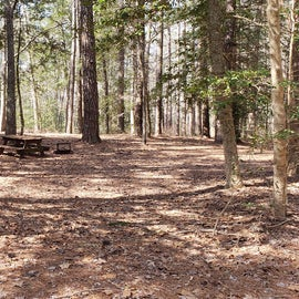 Pocomoke River Shad Landing Site 124