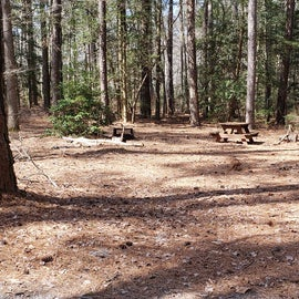 Pocomoke River Shad Landing Site 123