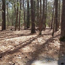 Pocomoke River Shad Landing Site 126