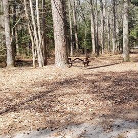 Pocomoke River Shad Landing Site 150