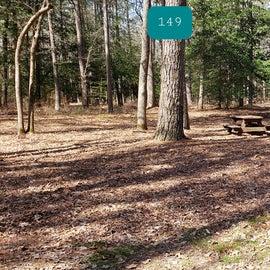 Pocomoke River Shad Landing Site 149