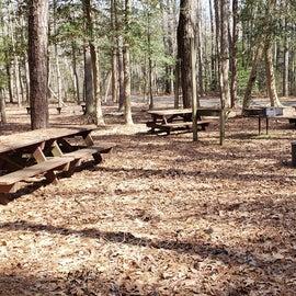 Pocomoke River Shad Landing Group Site