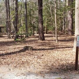 Pocomoke River Shad Landing Site 147