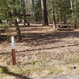 Pocomoke River Shad Landing Site 146