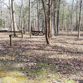 Pocomoke River Shad Landing Group Site Dogwood
