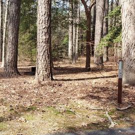 Pocomoke River Shad Landing Site 143