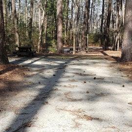 Pocomoke River Shad Landing Site 81