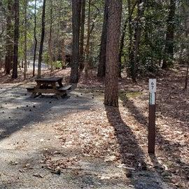 Pocomoke River Shad Landing Site 67
