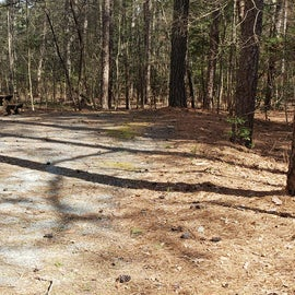 Pocomoke River Shad Landing Site 60