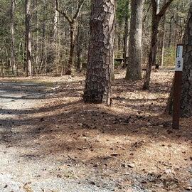 Pocomoke River Shad Landing Site 59