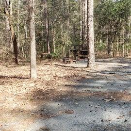 Pocomoke River Shad Landing Site 58