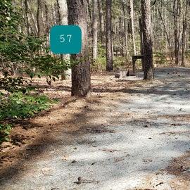 Pocomoke River Shad Landing Site 57