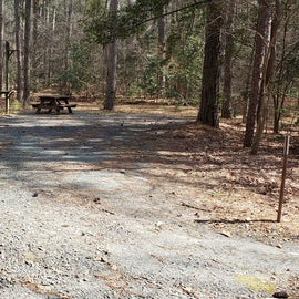 Pocomoke River Shad Landing Site 56