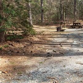 Pocomoke River Shad Landing Site 55
