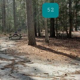 Pocomoke River Shad Landing Site 52