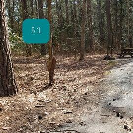 Pocomoke River Shad Landing Site 51