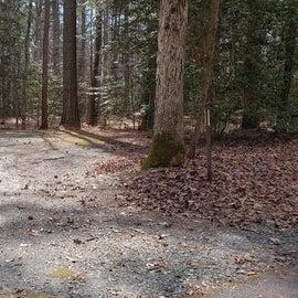 Pocomoke River Shad Landing Site 47