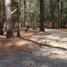 Pocomoke River Shad Landing Site 46