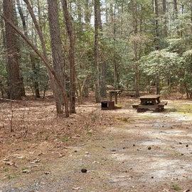 Pocomoke River Shad Landing Site 40