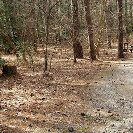 Pocomoke River Shad Landing Site 41