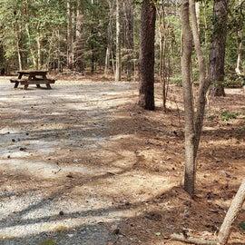 Pocomoke River Shad Landing Site 39