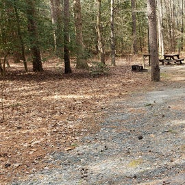 Pocomoke River Shad Landing Site 36