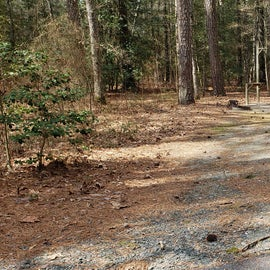 Pocomoke River Shad Landing Site 35