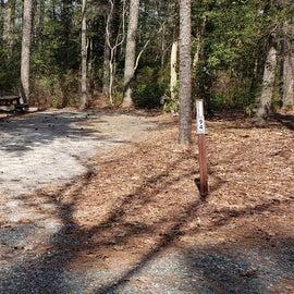 Pocomoke River Shad Landing Site 94