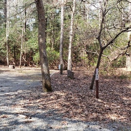 Pocomoke River Shad Landing Site 95