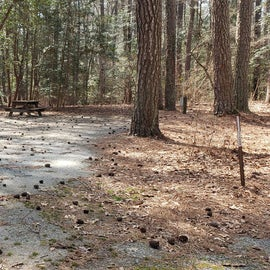 Pocomoke River Shad Landing Site 100