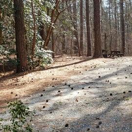Pocomoke River Shad Landing Site 102