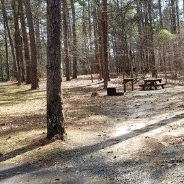 Pocomoke River Shad Landing Site 105