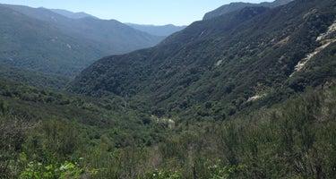 Sequoia/Quaking Aspen