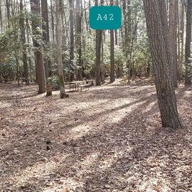Martinak State Park Site A42