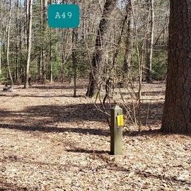 Martinak State Park Site A49