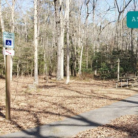 Martinak State Park Site A52